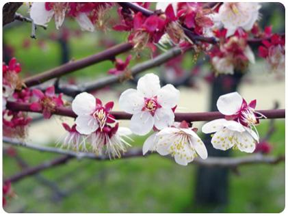 2010年 立春 2月は立春